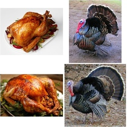Delicious Turkey or Angry Turkey